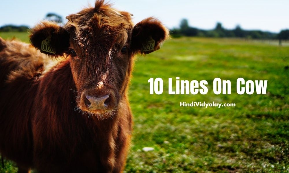 10 Lines On Cow (गाय) In Hindi And English Language