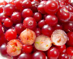 Dry Fruit Name - Cranberry