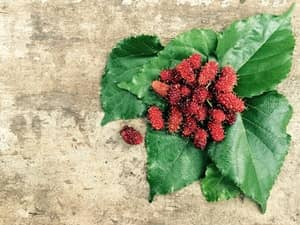 Fruit Name - Mulberry