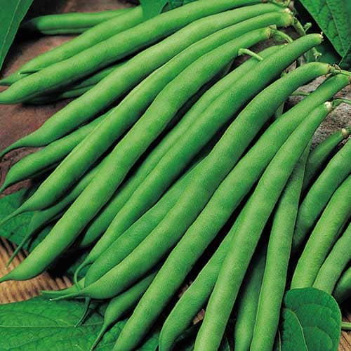 Vegetable Name - French Beans