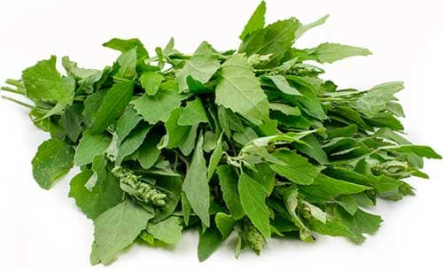 Vegetable Name - Wild spinach